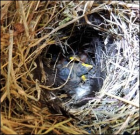 My first view inside the nest.