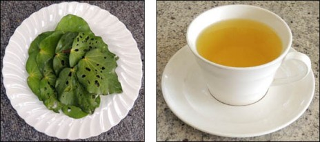 Left to right: kawakawa leaves, kawakawa tea