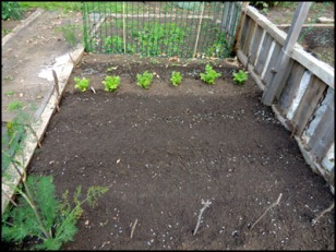 The newly tidied-up patch of the vegetable garden.