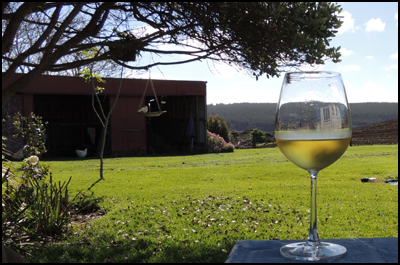 Glass of Corbans 2002 Private Bin Hawkes Bay Chardonnay, after a day gardening