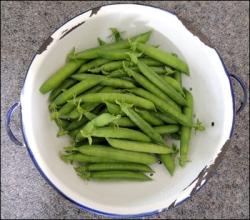 Fresh garden peas.