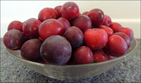We've picked just about the last of our plums today.