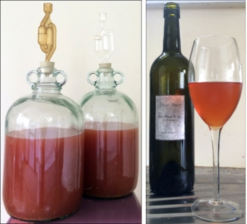 Plum wine: a new batch and the finished product.