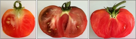Tomatoes (Left to Right): Bloody Butcher, Black Krim, Mortgage Lifter