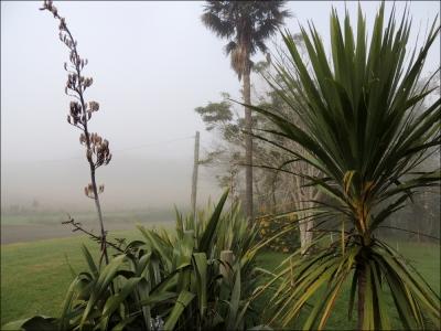 mist 03