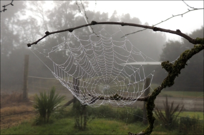 orbweb