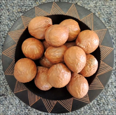 Macadamia Nuts prior to cracking.
