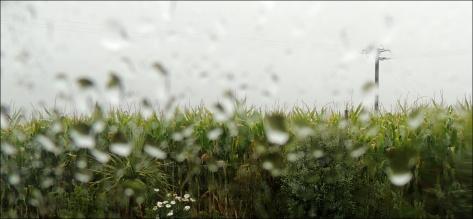 rain-02