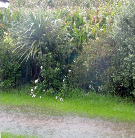 grass rain 02